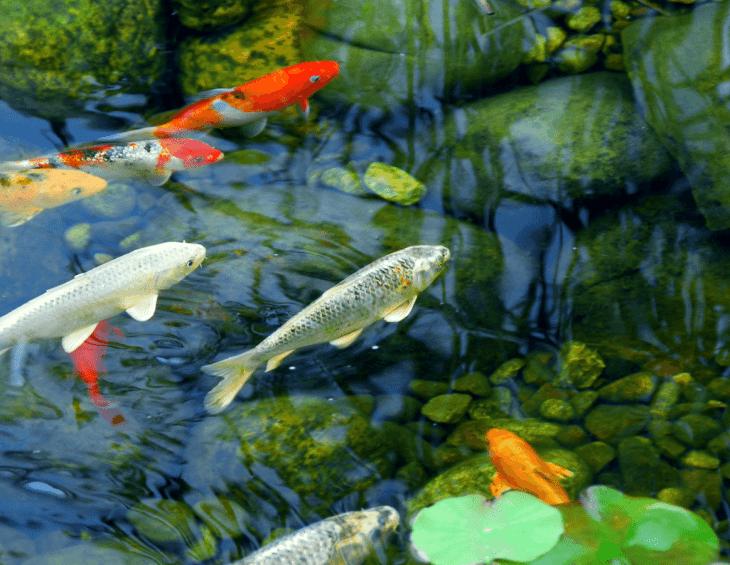 Garden Ponds Bangor